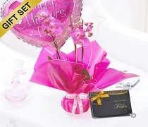 Mother's Day Pink Orchid Plant with Belgian Chocolates and a Happy Mother's Day Balloon Code: JGFM1454POP-CB |Local Delivery Or Collect From Shop Only