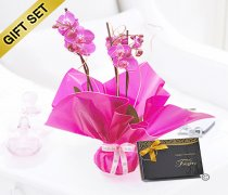 Mother's Day Pink Phalaenopsis Orchid Plant with a box of Belgian Chocolates  Code: JGFM1454POP-C | Local Delivery Or Collect From Shop Only