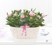 With Love Pink Rose Basket Code: JGF27751PR | Local Delivery Or Collect From Shop Only