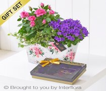 Summer Planted Tin with Belgian Chocolates Code: H64171MB | National and Local Delivery