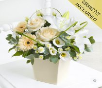 Buttercream Beauty Arrangement Code: C00321CS | National and Local Delivery