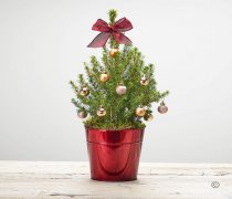 O Christmas Tree Code: JGFX90791GS | Local Delivery Or Collect From Shop Only