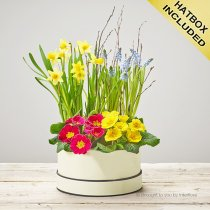 Dazzling Mixed Planted Hatbox Code: S33641MS | National and Local Delivery
