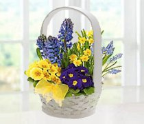 Spring Garden Planted Basket Code: JGFSP630SPB Local Delivery Only