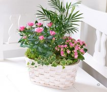 Mixed Planted Basket Code: C04691MS