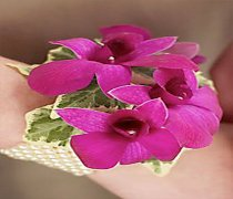 Dendrobium Orchid Wrist Corsage Code: W27011PU