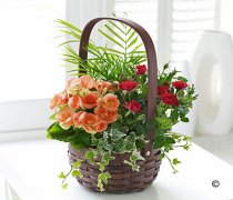 Autumn Planted Basket Code: JGFA80807PB | Local Delivery Or Collect From Shop Only